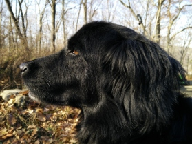 Morris the Wonder Dog profile 2016