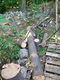 Pine staff blanks